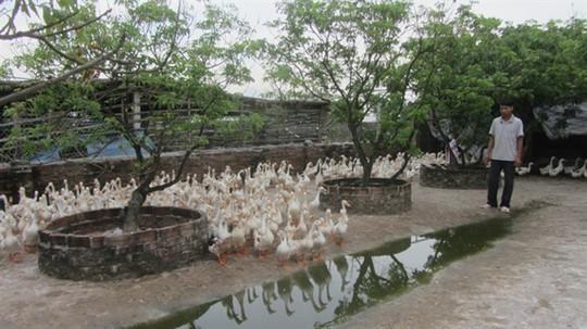 Ấp trứng vịt lộn, một thôn thu gần 200 tỉ đồng mỗi năm - Ảnh 1.