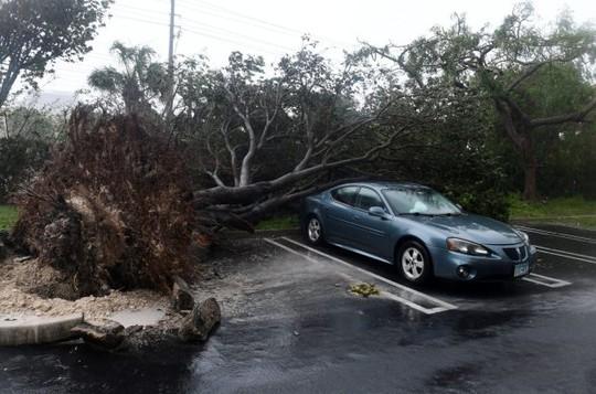 Mất nhà vì bão Irma, cá sấu lang thang ở Florida - Ảnh 3.