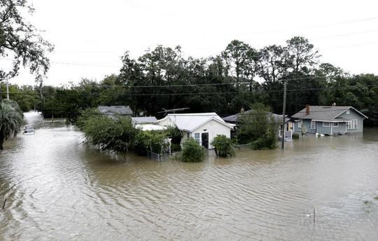 Mất nhà vì bão Irma, cá sấu lang thang ở Florida - Ảnh 4.