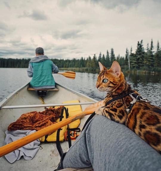 Nàng mèo sở hữu thân hình và cái nhìn gây thương nhớ - Ảnh 2.