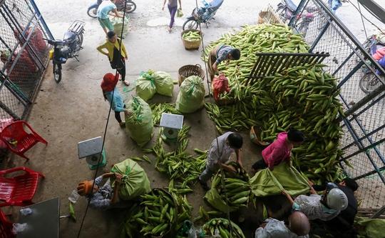 Chợ bắp lớn nhất Sài Gòn - Ảnh 1.
