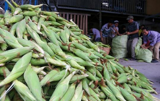 Chợ bắp lớn nhất Sài Gòn - Ảnh 2.