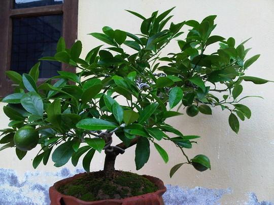 10 loại cây vừa cho ăn trái vừa làm đẹp sân vườn - Ảnh 1.