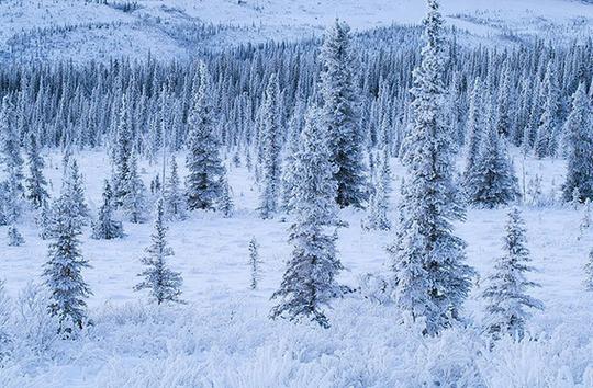 Mỹ trả tiền để thu hút dân đến sống ở bang lạnh giá Alaska - Ảnh 2.
