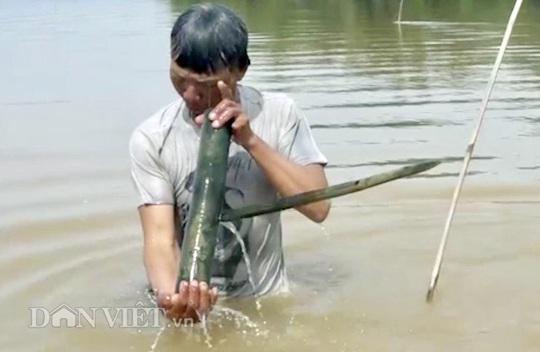 Cuối mùa săn cá bống ở đáy sông Trà Khúc - ảnh 4