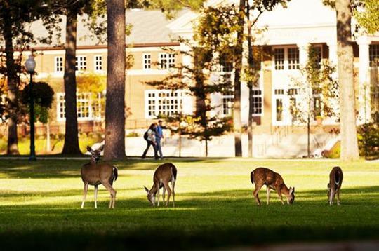Lạc lối trong khuôn viên trường đại học rộng nhất thế giới - Ảnh 13.