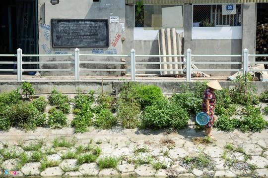 Kiểu trồng rau có 1 không 2 của người Hà Nội - Ảnh 18.