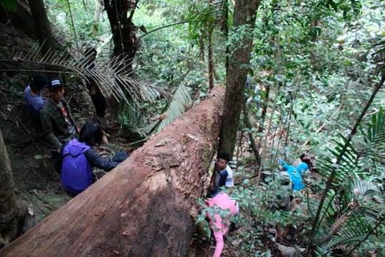 Dân làng người A Rem vào rừng săn rượu đoác