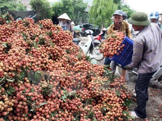 Quả xoài 1,7 triệu, vải thiều 400.000 đồng/12 quả: Xót lòng dân Việt - Ảnh 3.