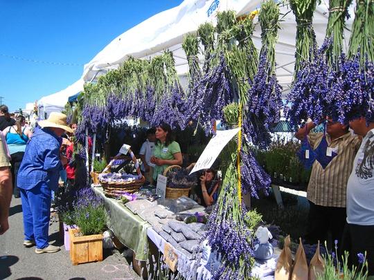 Thiên đường oải hương tràn sắc tím giữa lòng Provence - Ảnh 4.