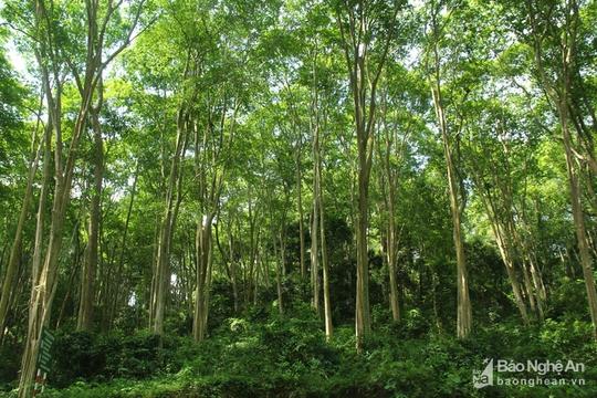 Khu rừng cấm ở Tương Dương - Ảnh 3.