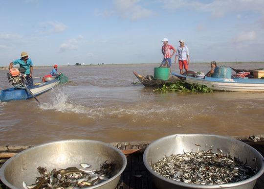 Chợ cá rặt đồng mùa nước nổi ở miền Tây - Ảnh 3.
