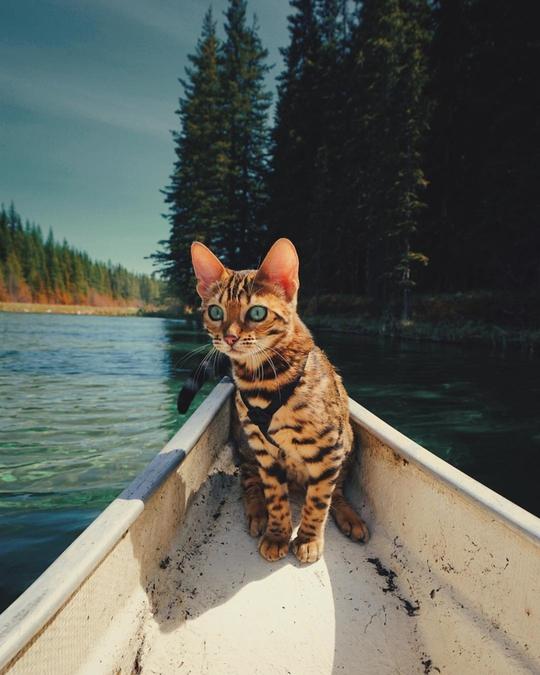 Nàng mèo sở hữu thân hình và cái nhìn gây thương nhớ - Ảnh 3.
