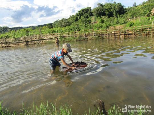 Chiêu độc săn cá suối của trẻ em vùng cao Nghệ An - Ảnh 3.