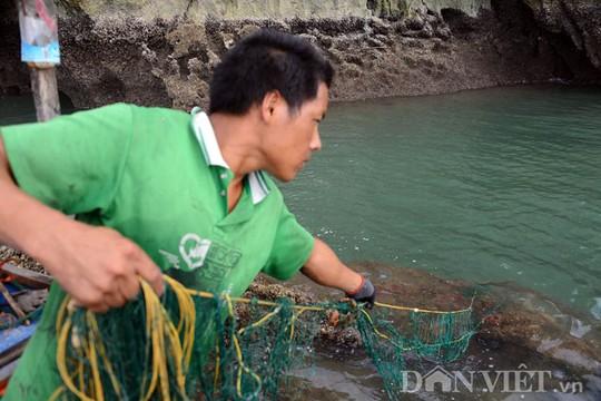 Tận mắt thấy cao thủ săn con cù kỳ nức tiếng ở vịnh Bái Tử Long - Ảnh 9.