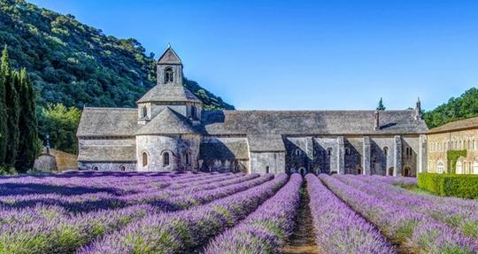 Thiên đường oải hương tràn sắc tím giữa lòng Provence - Ảnh 5.