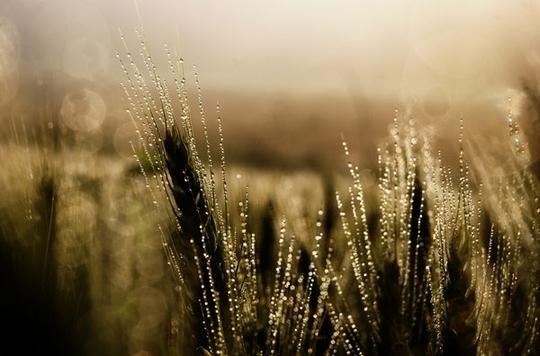 Vẻ đẹp của sương sớm trong nắng ban mai - Ảnh 4.