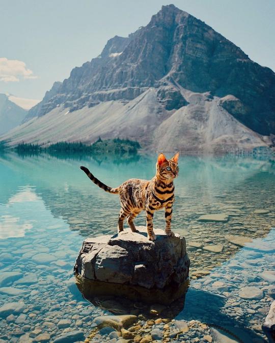 Nàng mèo sở hữu thân hình và cái nhìn gây thương nhớ - Ảnh 4.