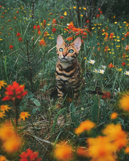 Nàng mèo sở hữu thân hình và cái nhìn gây thương nhớ - Ảnh 5.