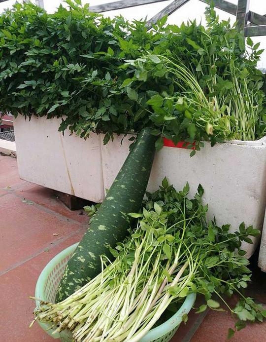 Khoai tây, bắp cải dày đặc trên mái nhà ở Hà Nội - Ảnh 5.