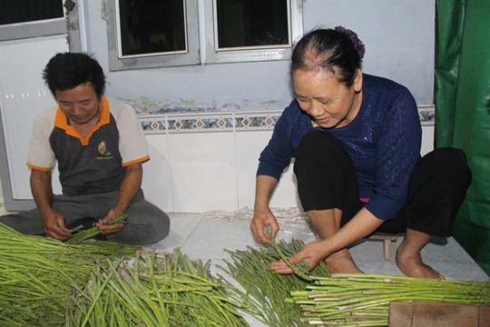 Hai vợ chồng ông Chử đang bó gọn măng tây chờ người đến thu mua
