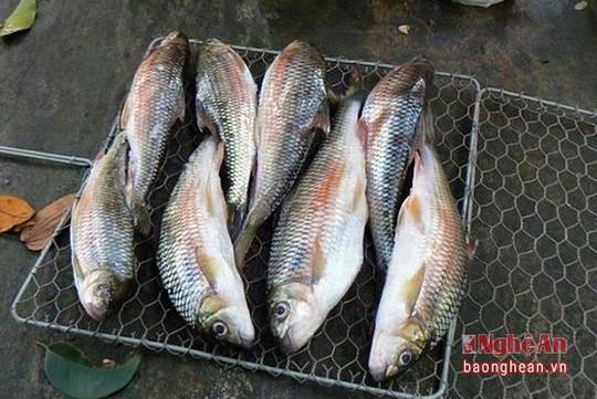 Săn cá đặc sản ở Nghệ An - Ảnh 6.