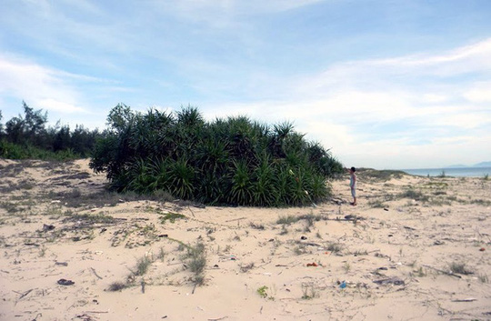 Đại gia bí ẩn buông chục tỉ mua đất ven biển Tam Kỳ - Ảnh 6.