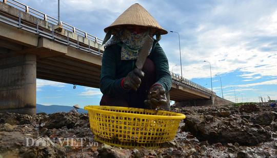 Săn hàu dưới chân cầu Nhơn Hội, TP Quy Nhơn - Ảnh 2.