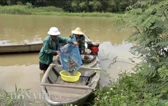 Cuối mùa săn cá bống ở đáy sông Trà Khúc - ảnh 2