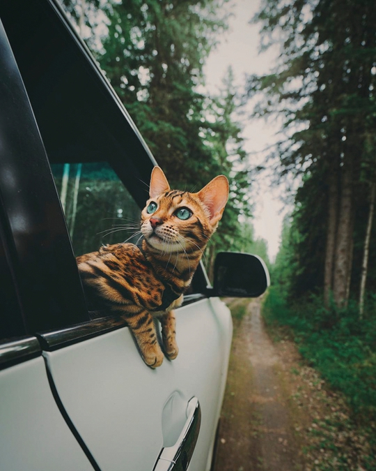 Nàng mèo sở hữu thân hình và cái nhìn gây thương nhớ - Ảnh 8.
