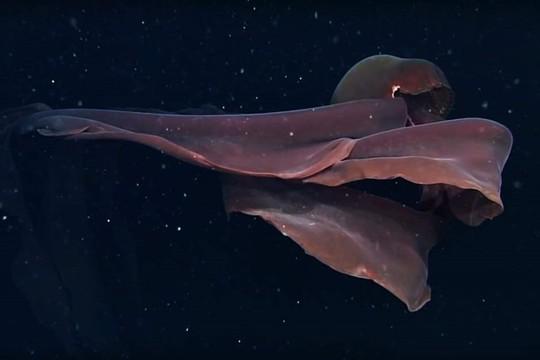 8 sinh vật kỳ dị dưới đáy đại dương - Ảnh 9.
