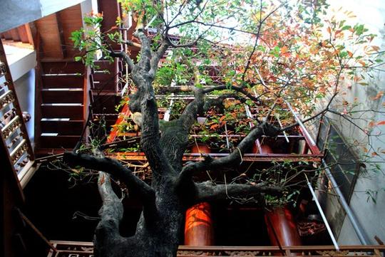Ngôi nhà toàn gỗ giá 30 tỉ đồng giữa TP Hà Tĩnh - Ảnh 10.