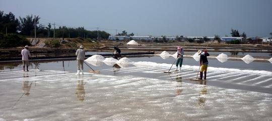 Muối Ninh Thuận được giá nhưng mất mùa - Ảnh 1.