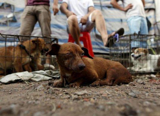 Lễ hội thịt chó Trung Quốc bất ngờ được tổ chức - Ảnh 2.