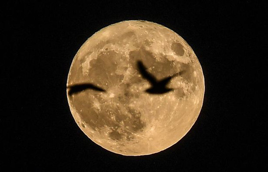Siêu mặt trăng xuất hiện vào cuối tuần này - Ảnh 1.