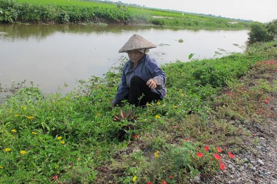 Ngỡ ngàng những con đường hoa rực rỡ làng quê miền Bắc - Ảnh 32.