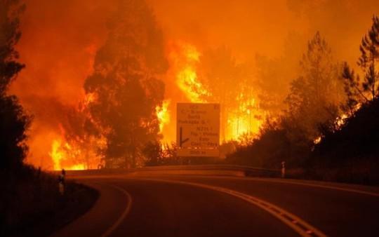 Cháy rừng bí ẩn, hàng chục người chết trong ô tô - Ảnh 1.