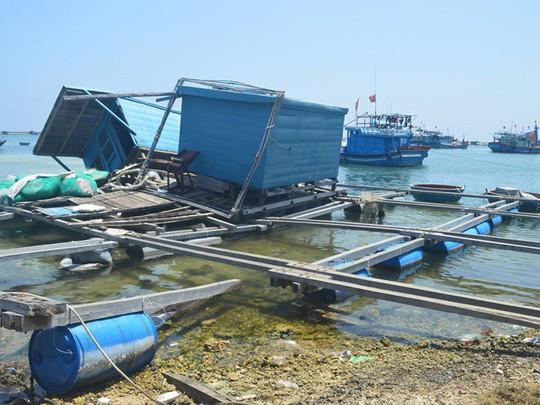 Dân đảo Lý Sơn kéo lồng bè vào bờ bỏ hoang ẢNH: HIỂN CỪ