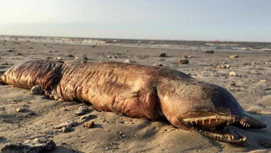 """Quái vật biển"""" bí ẩn trôi dạt vào Texas sau bão Harvey - Ảnh 1."""