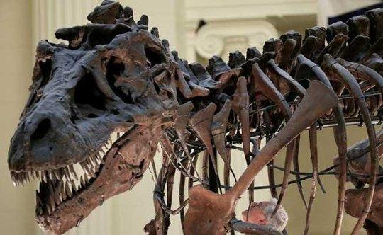 Hoảng hồn vì cú cắn của khủng long bạo chúa - Ảnh 1.