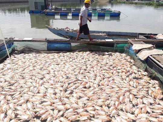 Hơn 80 tấn cá chết trắng trên sông Cổ Cò - Ảnh 2.