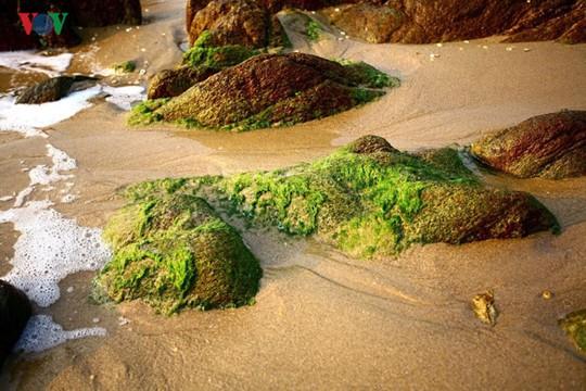 Ngắm vẻ đẹp của bãi biển hoang sơ dưới chân đèo Ngang - Ảnh 5.