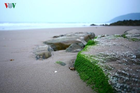 Ngắm vẻ đẹp của bãi biển hoang sơ dưới chân đèo Ngang - Ảnh 12.