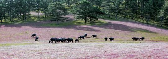 Ngây ngất với Thảo nguyên - cỏ hồng Đà Lạt dịp lễ 2-9 - Ảnh 7.