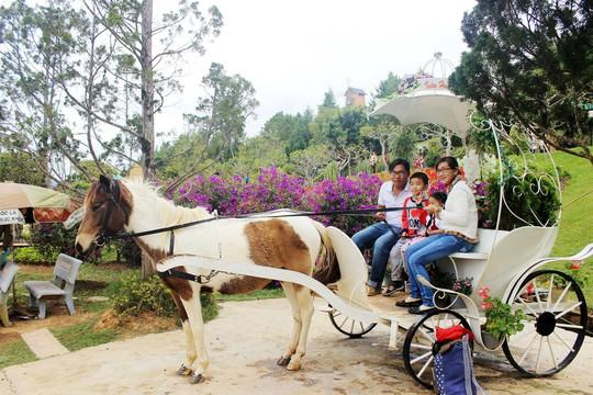 Chụp ảnh lưu niệm cùng xe ngựa, một đặc sản của xứ sở ngàn hoa Đà Lạt.