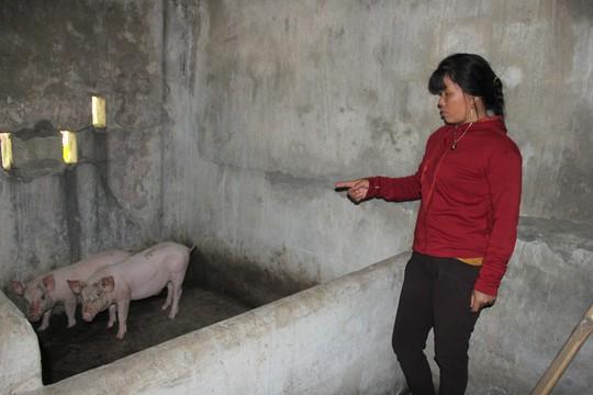 Lợn giống cấp cho dân để giảm nghèo bất ngờ chết hàng loạt - Ảnh 1.