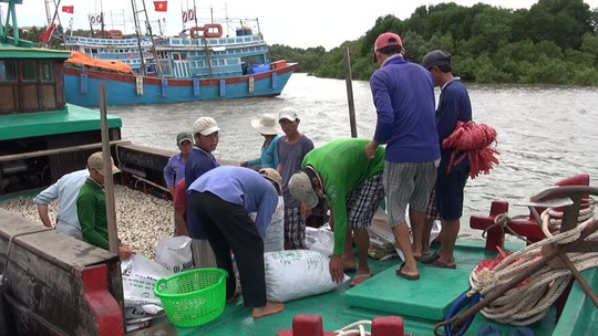 Dân biển Cần Giờ hốt cú chót trước khi tránh bão số 9 - Ảnh 4.