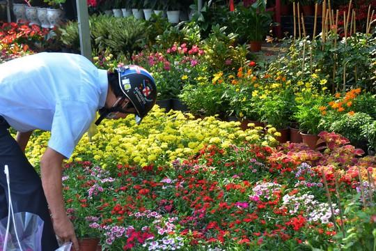 Nhà vườn Đà Lạt dè dặt tăng sản lượng hoa Tết - Ảnh 1.