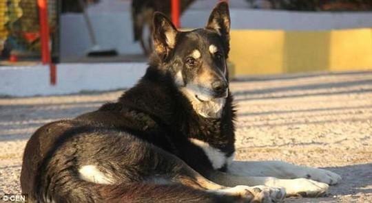 Chó ngủ cạnh mộ chủ suốt 11 năm cho đến chết - Ảnh 1.