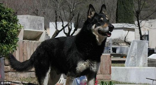Chó ngủ cạnh mộ chủ suốt 11 năm cho đến chết - Ảnh 3.